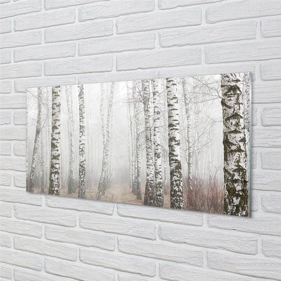 tulup.cz Sklenený obraz hmla breza 100x50cm
