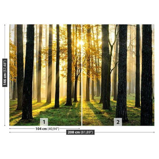 tulup.cz Fototapeta Vliesová Ráno v lese 208x146 cm