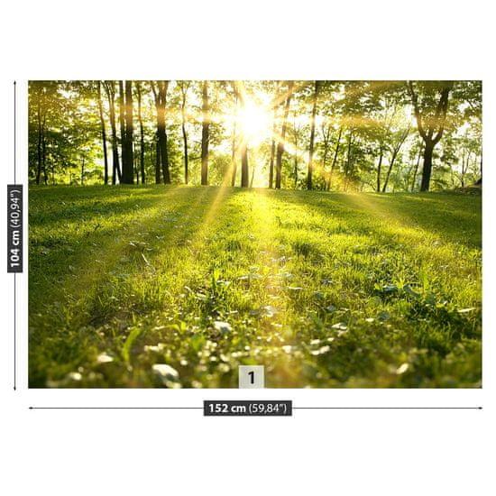 tulup.sk Fototapeta Lesné slnko