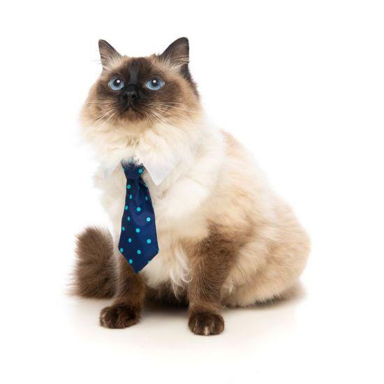 Fuzzyard kravata za pse ali mačke MR. CARRINGTON