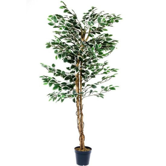shumee Műnövény PLANTASIA® Fikusz 160 cm