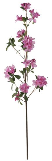 Shishi Rózsaszín azálea 105 cm