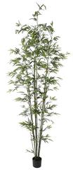Shishi Bambusowa zieleń z doniczką 2,4 m