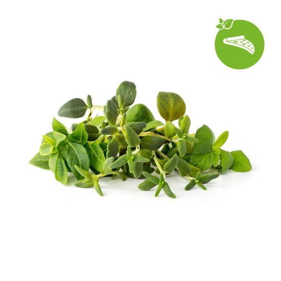 Click and Grow Mix Talianskych bylín, kapsule so semienkami a substrátom 9 ks