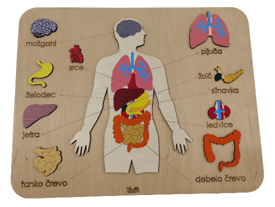 LINIT DESIGN Sestavljanka človeško telo