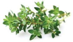 Click and Grow Smart Garden sazenice Tymián (SGTH)