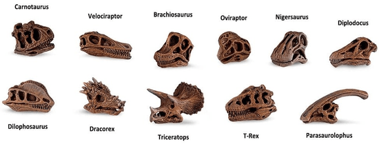 Safari Ltd. Tuba - Lubanje dinosaura